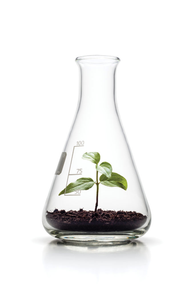plant within a medical flask